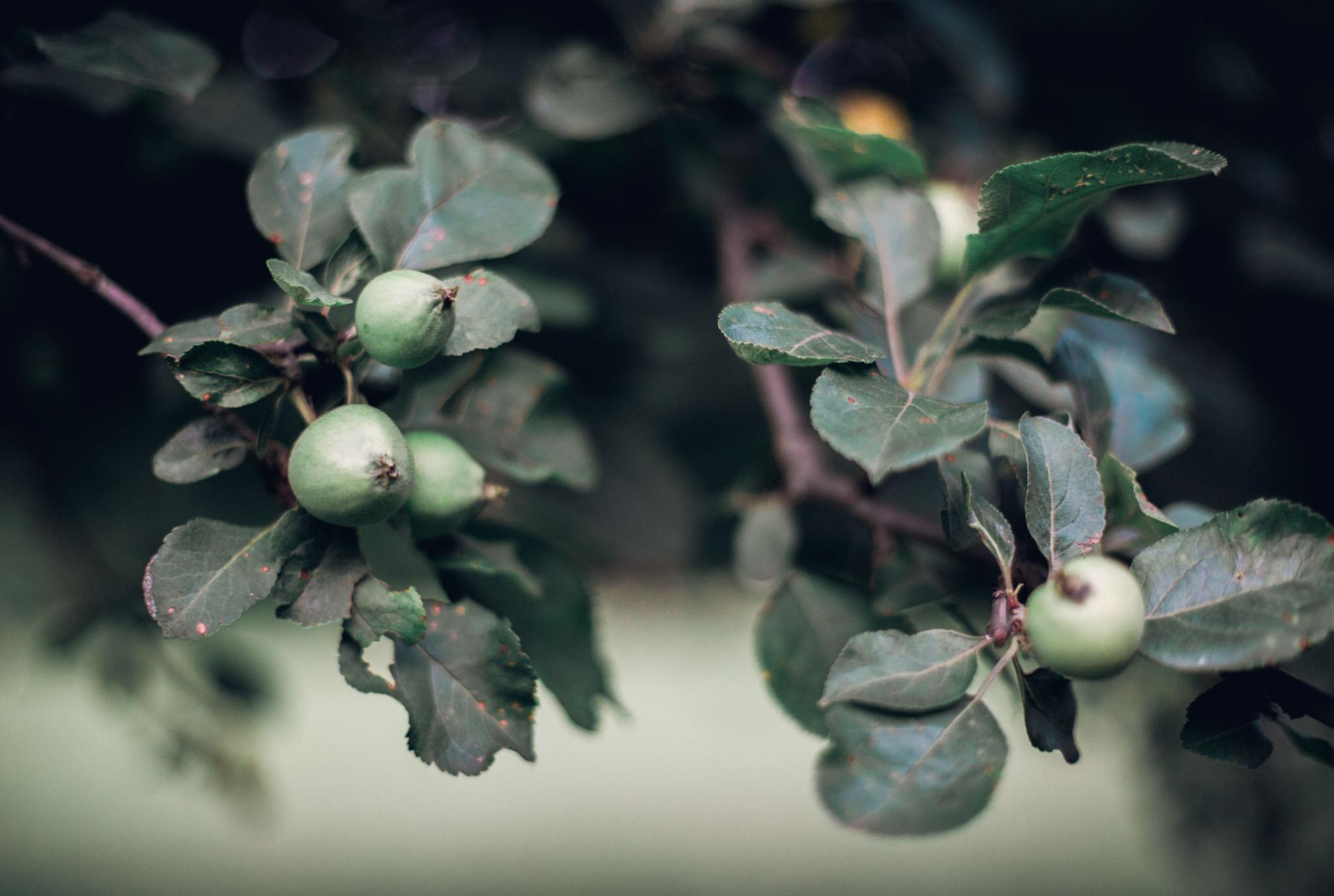 Pennsylvania vintage wedding orchard (2).jpg