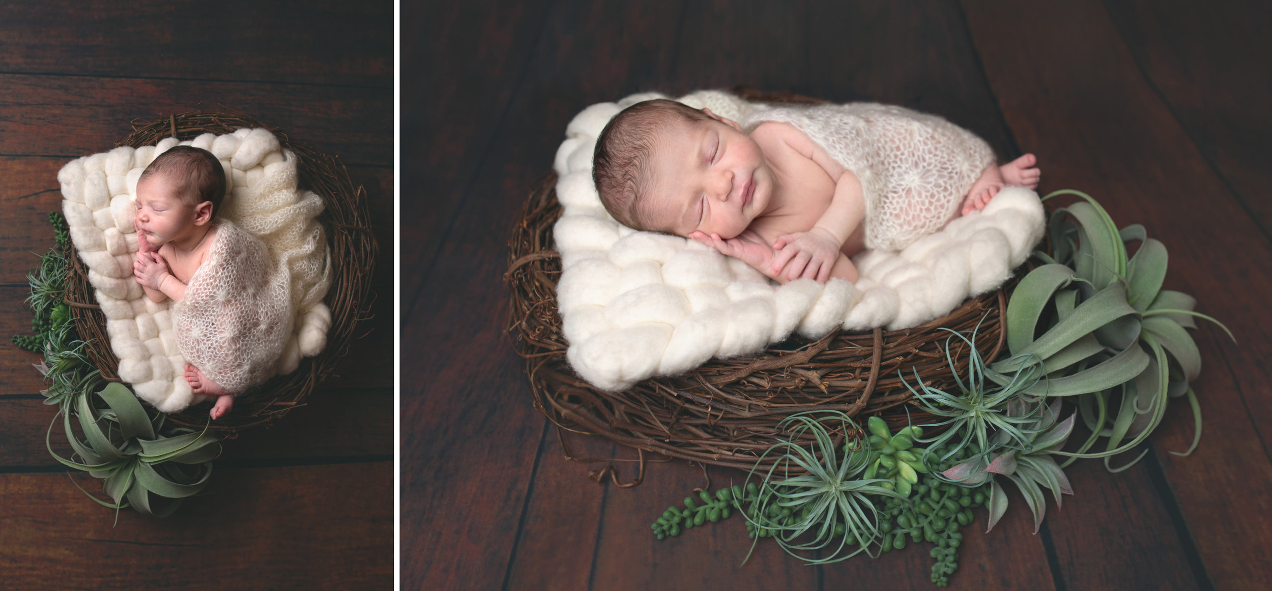 Ebensburg Altoona Pa newborn baby Cresson photographer_ Emery succulents (3).jpg