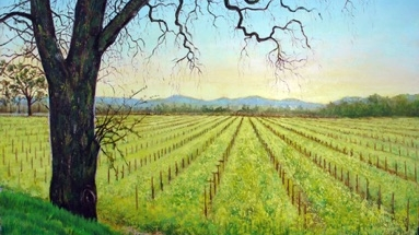 Mustard,-Napa-Valley-231.jpg