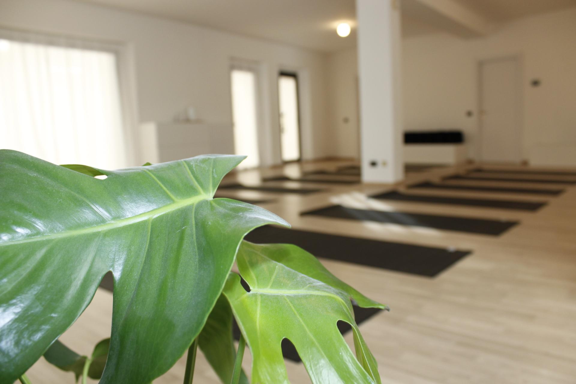 yoga-nilaya-shala2.JPG