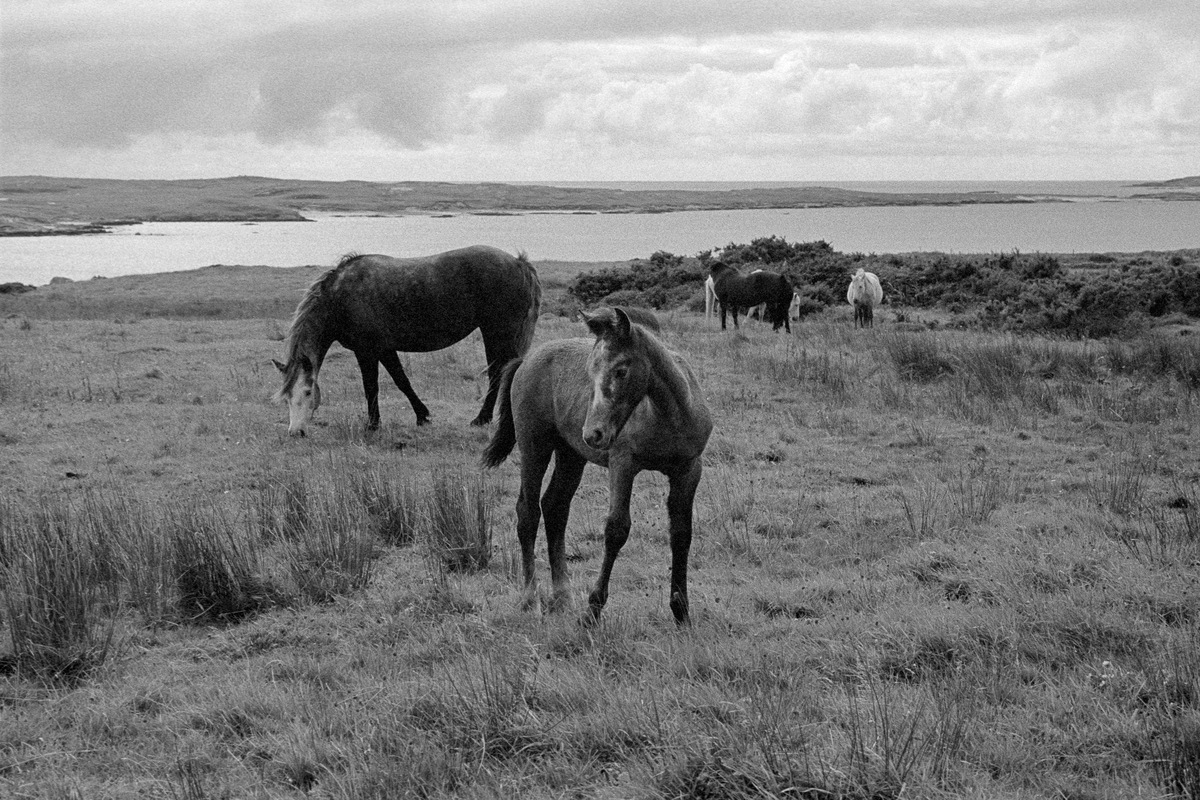 Siegfried-Salzmann-Fotografie-Irland 2017-24.jpg