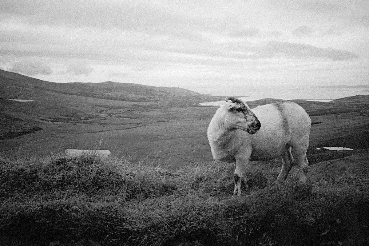 Siegfried-Salzmann-Fotografie-Irland 2017-30.jpg