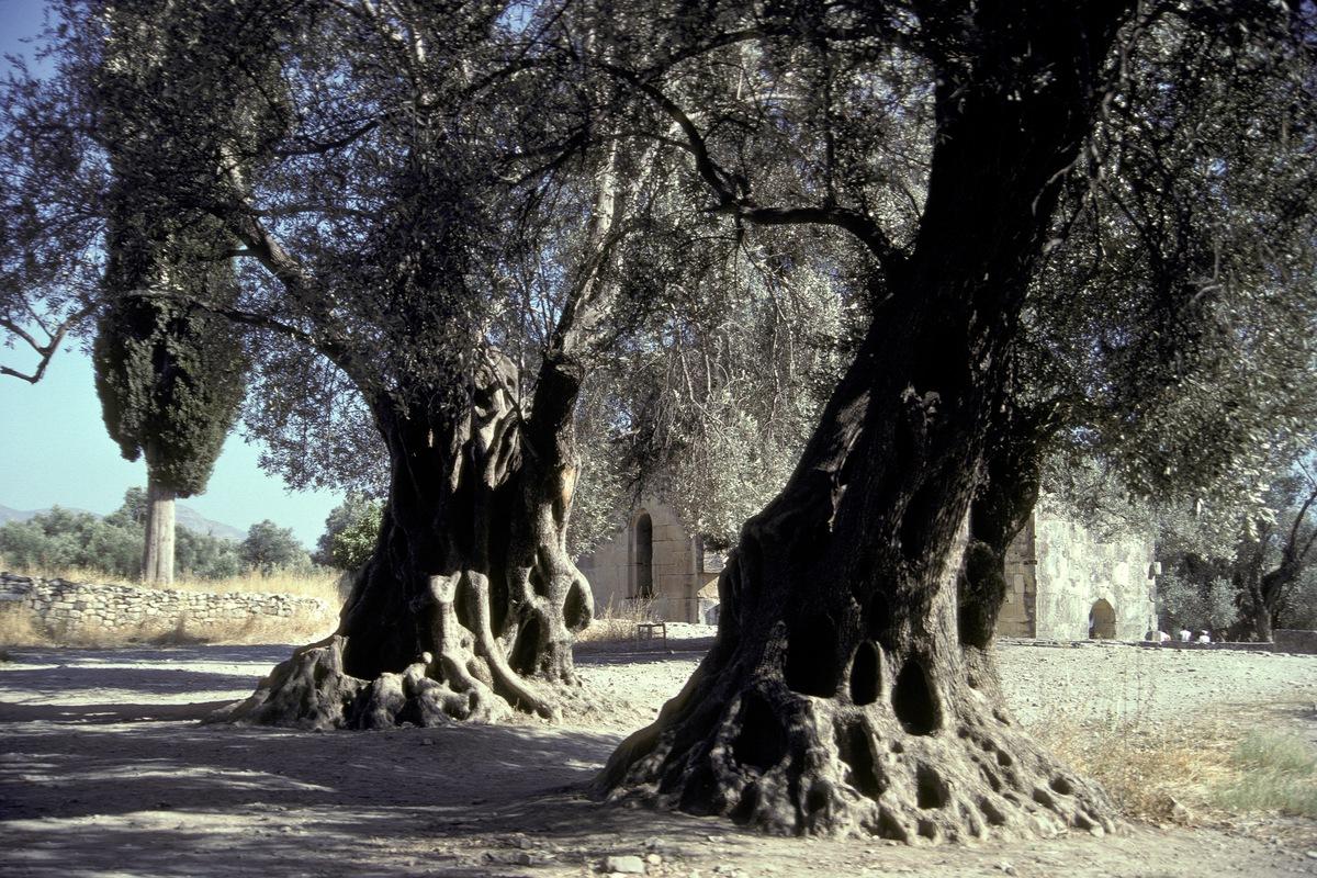 Siegfried-Salzmann-Fotografie-Kreta-7.jpg