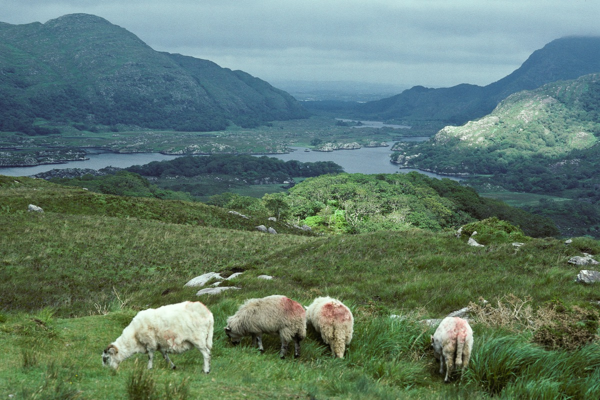 Siegfried-Salzmann-Fotografie-Irland 1992.jpg