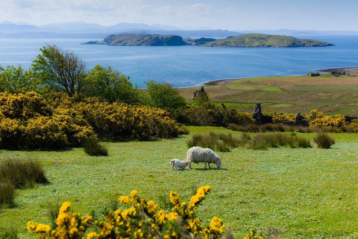 Siegfried-Salzmann-Fotografie-Schottland 2012-5.jpg