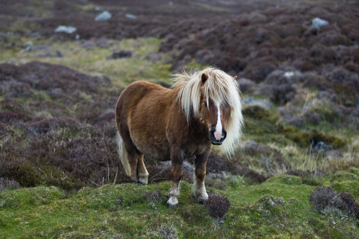 Siegfried-Salzmann-Fotografie-Schottland 2012-9.jpg