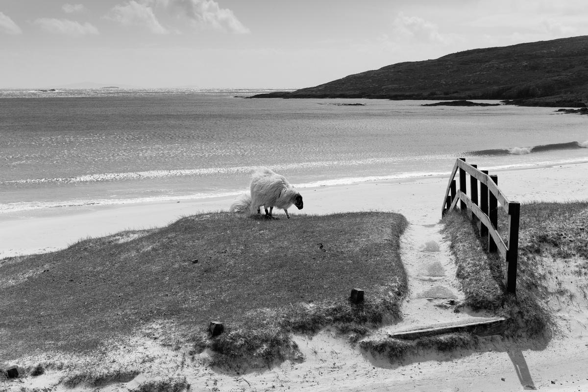 Siegfried-Salzmann-Fotografie-Schottland 2013-3.jpg