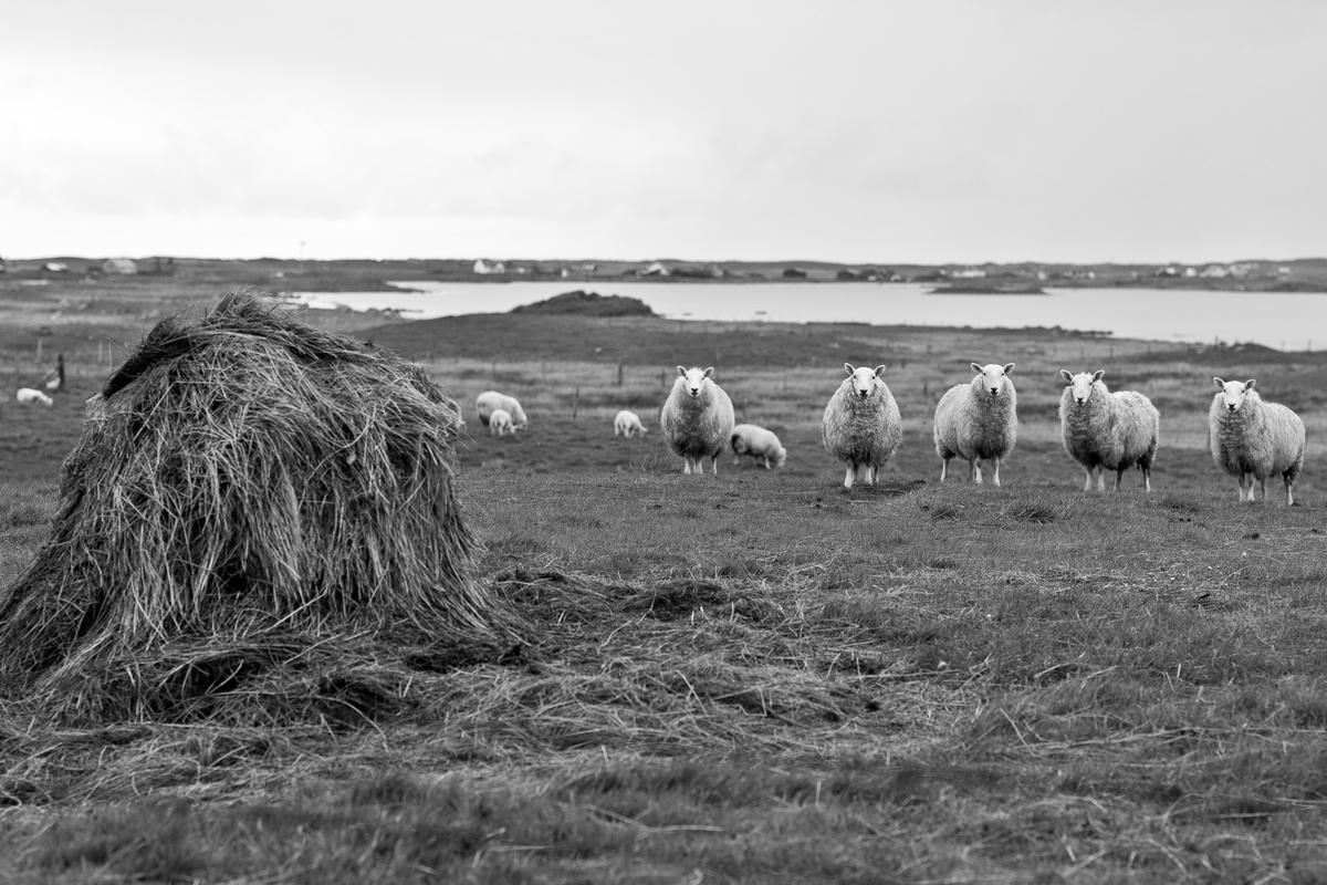 Siegfried-Salzmann-Fotografie-Schottland 2014-6.jpg