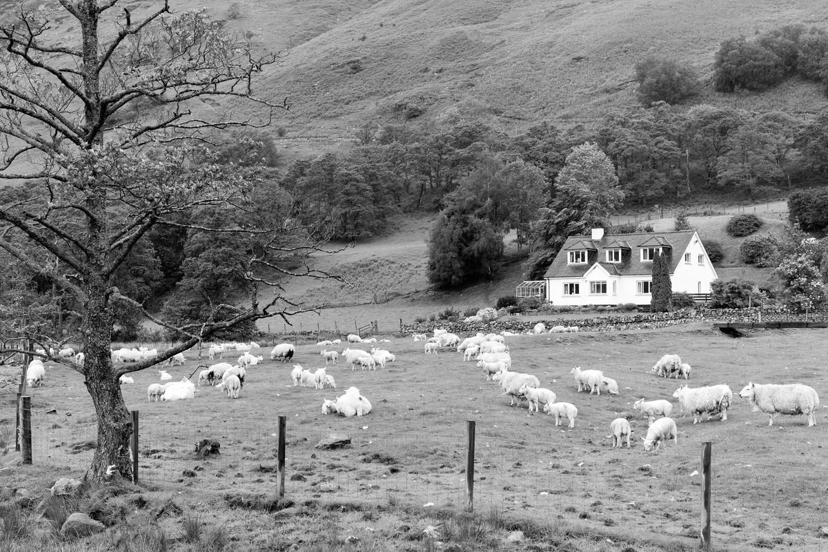 Siegfried-Salzmann-Fotografie-Schottland 2017-17.jpg