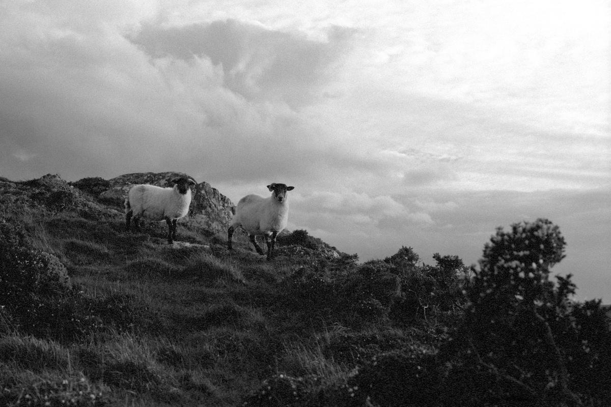 Siegfried-Salzmann-Fotografie-Irland 2018 1.jpg