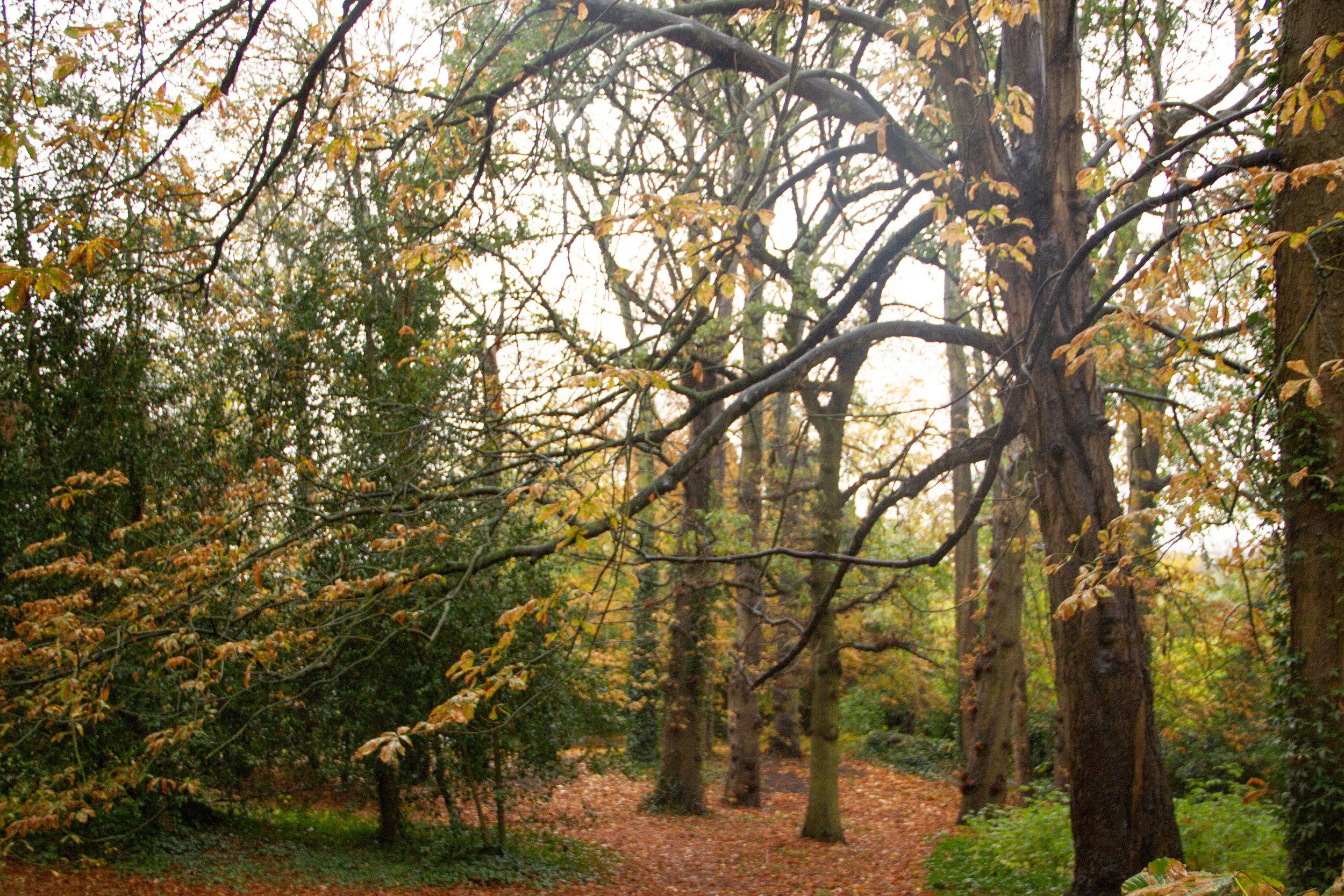 leaf_carpeted_woods.jpg