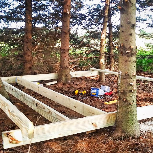 We are building a new structure in a Spruce grove in the middle of the fields at Tanner Creek Farm. Tom calls this area White Spruce Camp. More details coming but note that we are building around the living trees!