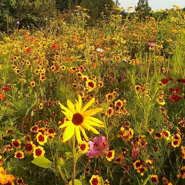 Early morning wildflowers captured by @tomjasik