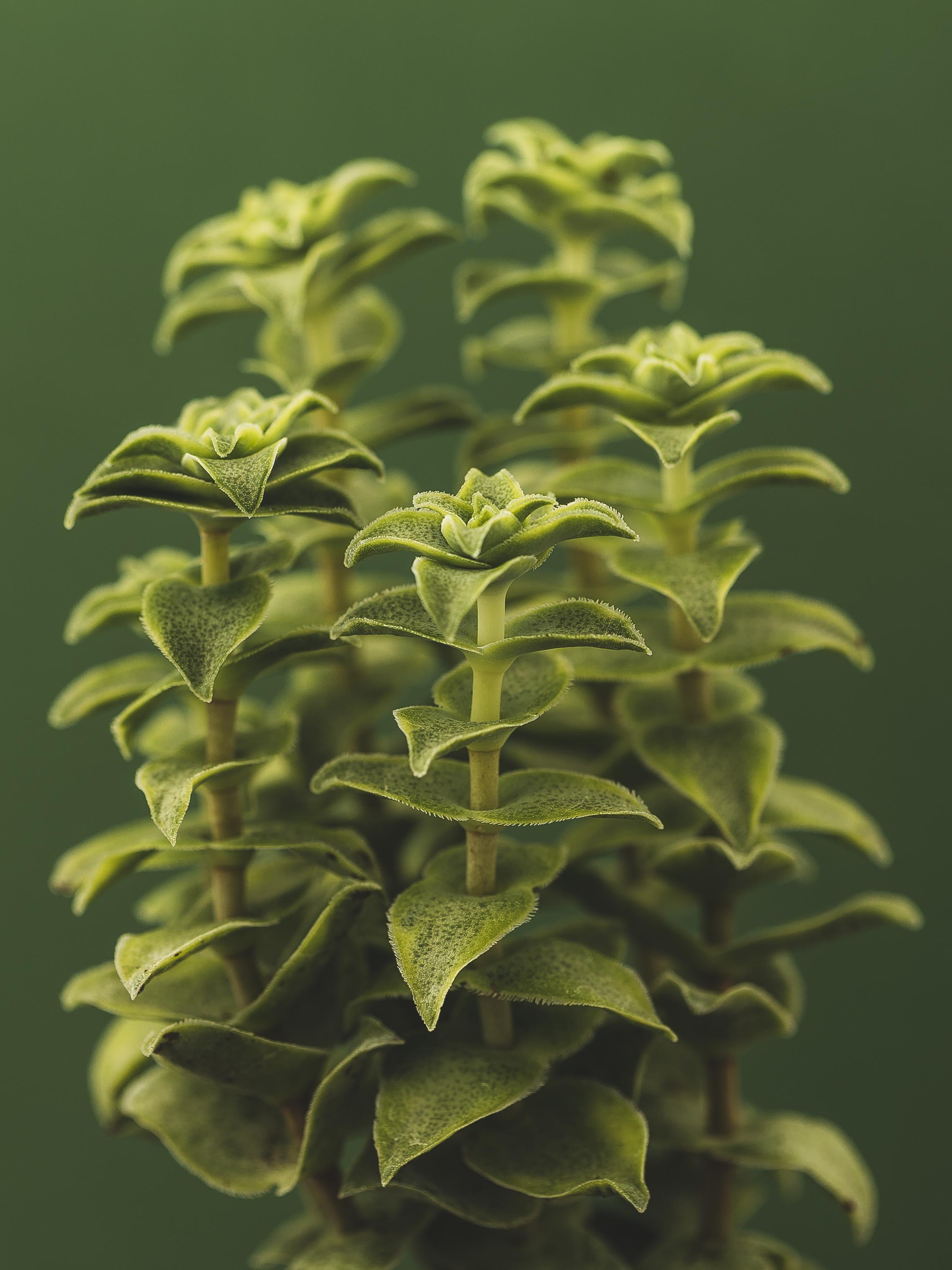 Flora-7.jpg