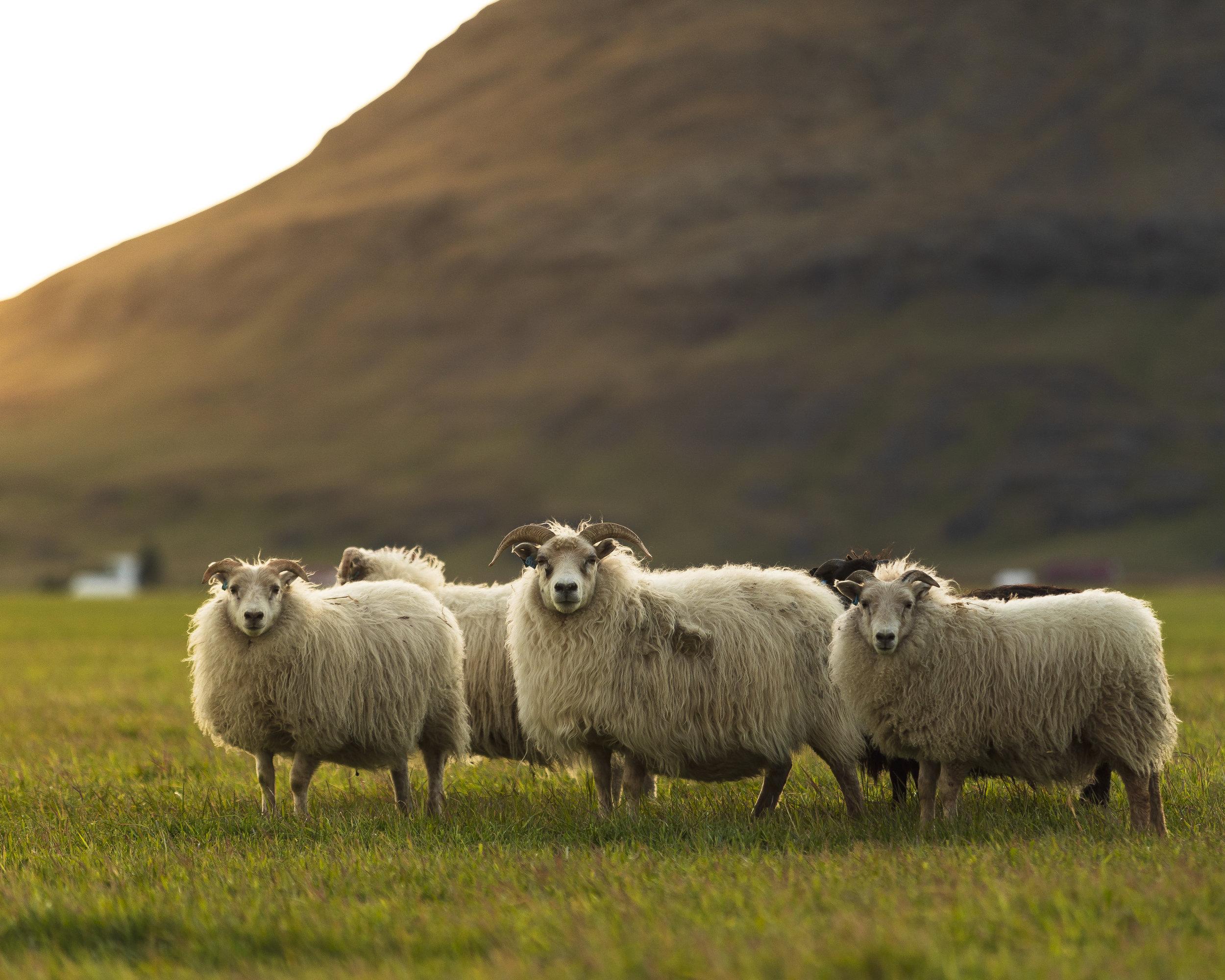 Iceland Site-2.jpg