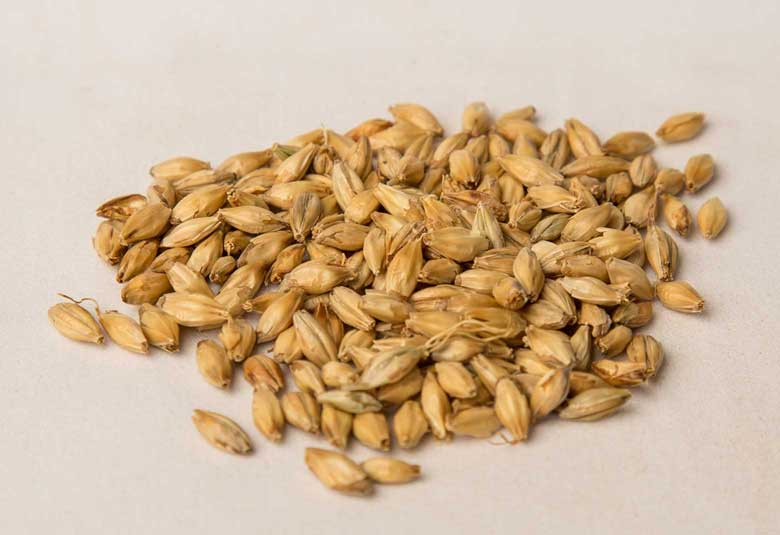MUNICH - 2-row barley grown with malting specifications in mind. Munich malts are whole dried malted barley, dark colored in appearance with a lightly toasted malt aroma and taste. Munich malts are used to brew traditional dark beers.Available as 25 KG or 50 lbs crushed.