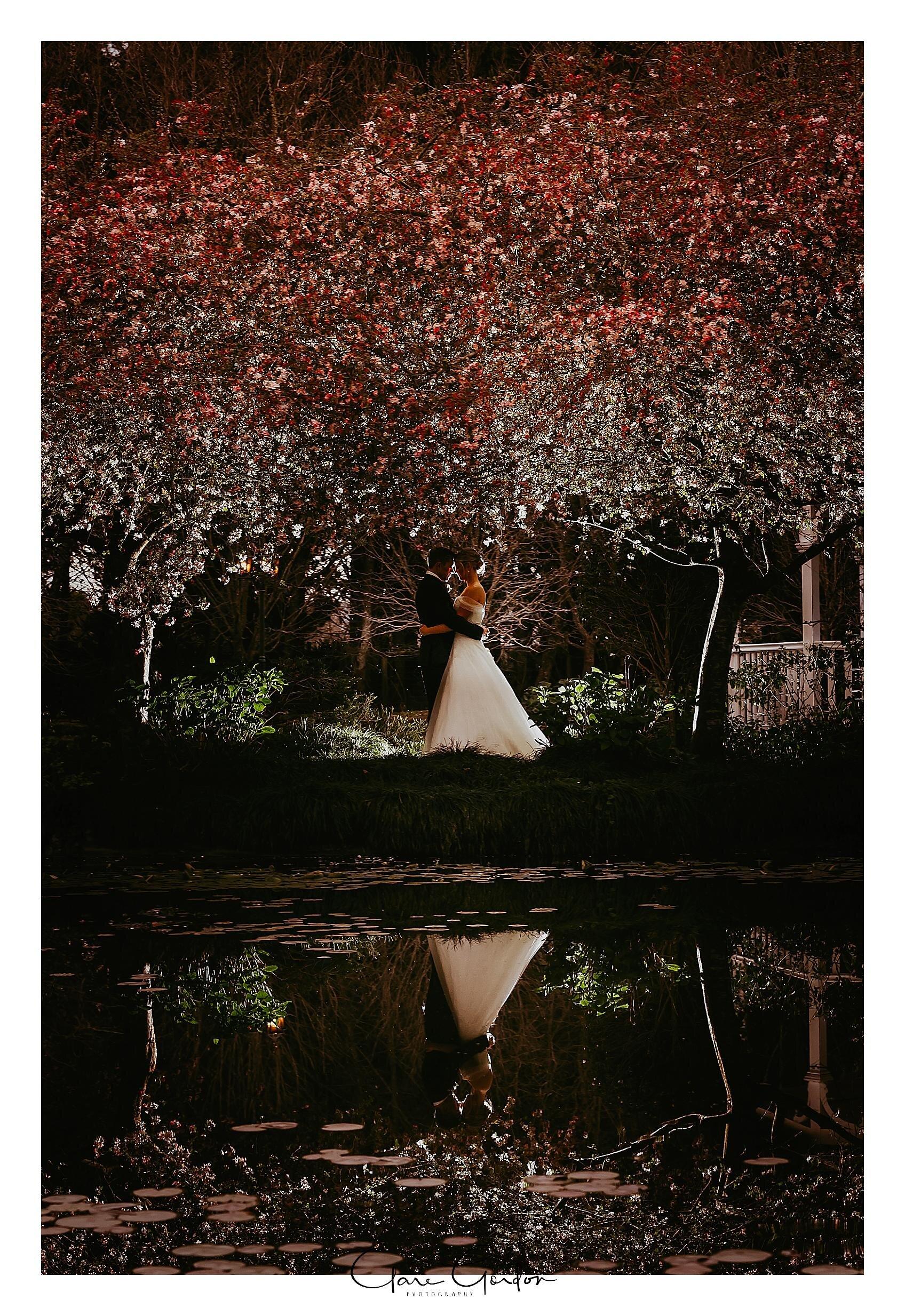 The-Henley-Hotel-Wedding-photo-Couple-under-cherry-blossoms-Clare-gordon-photography-waikato-wedding-photographer.jpg