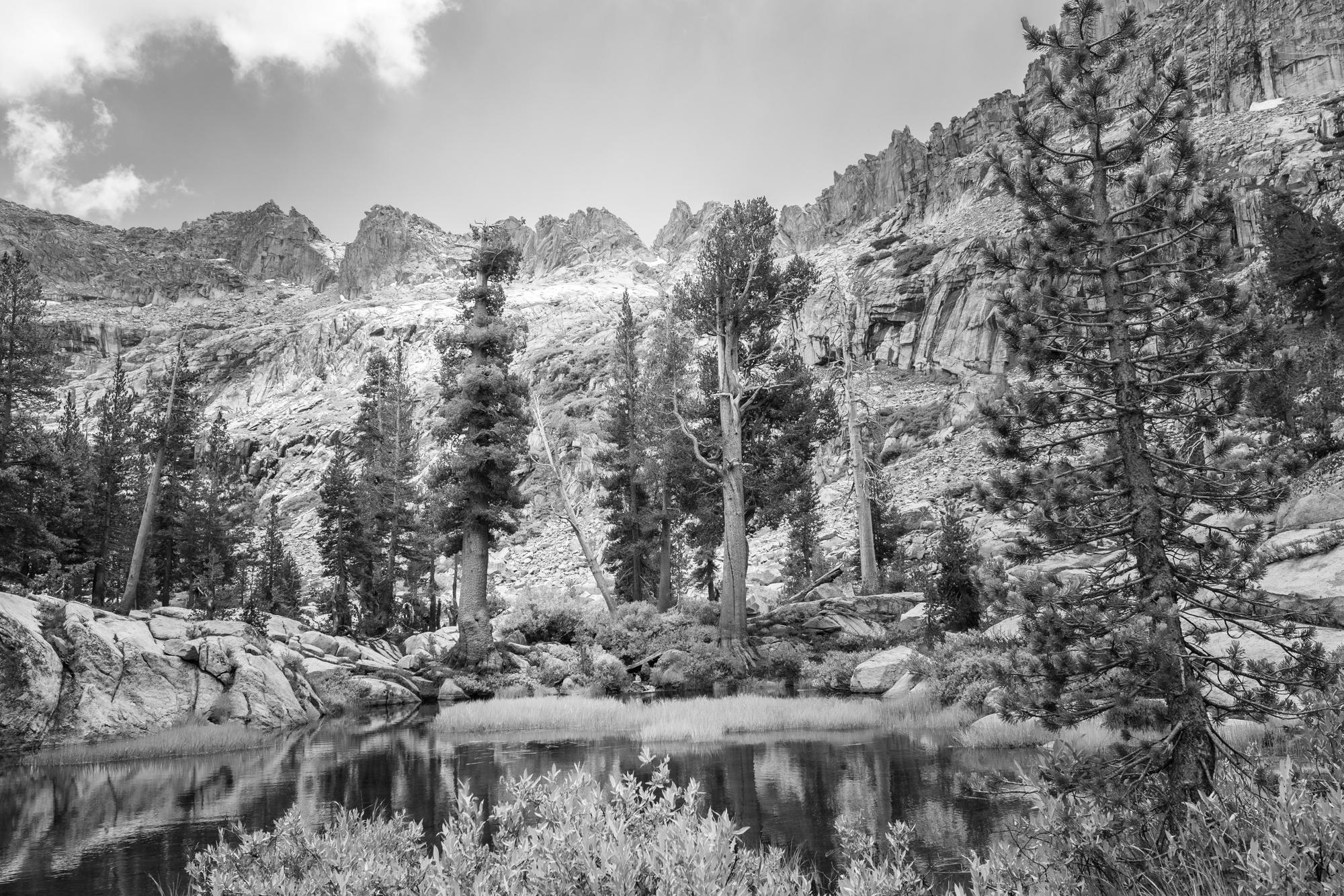 Sequoia No.2