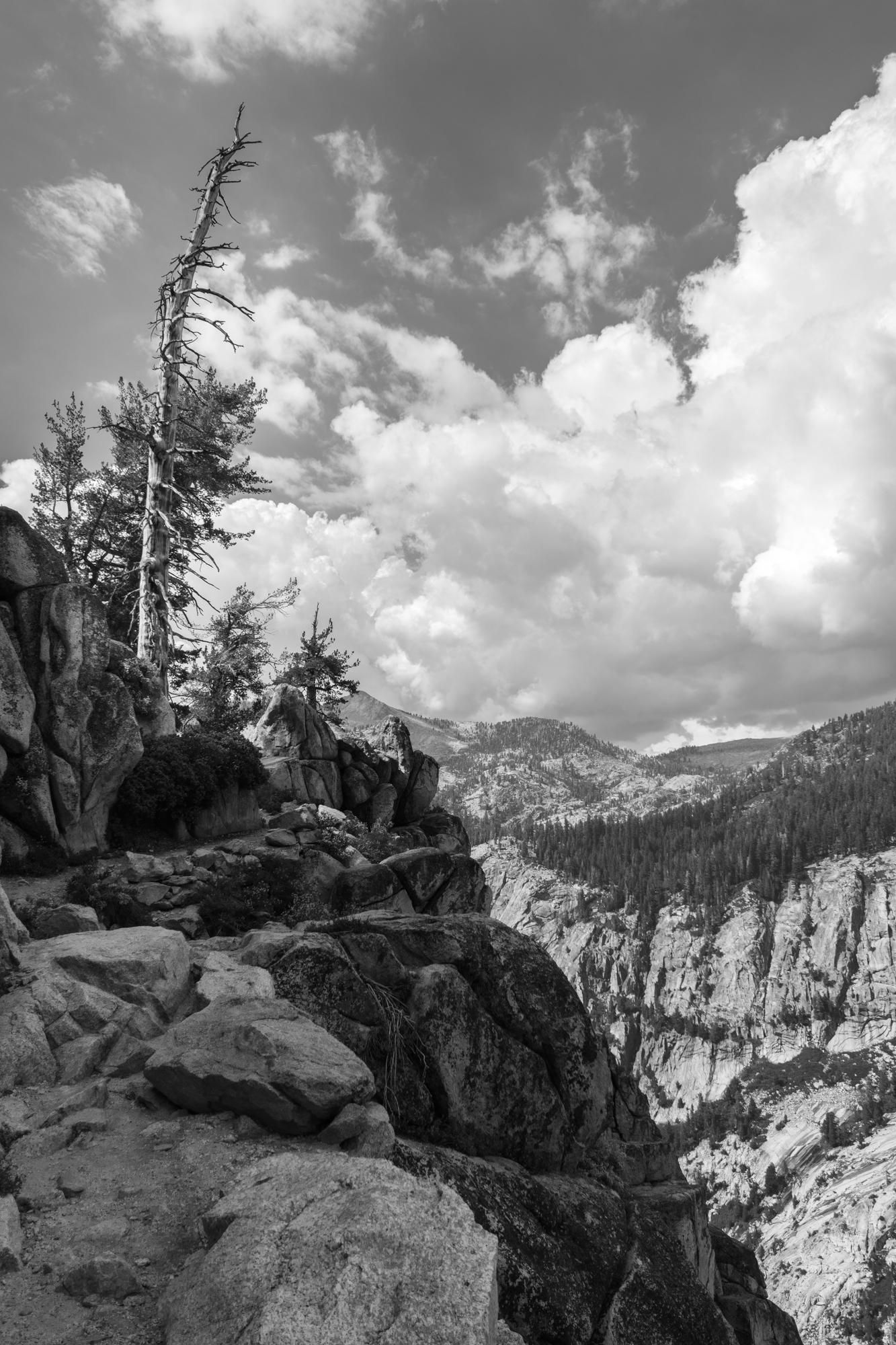 sequoia-3.jpg