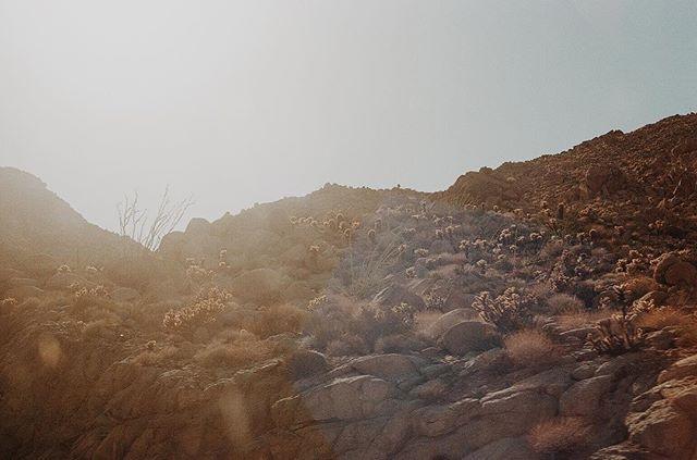 AZ   CA ✨ #35mm #portra400