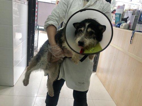 China Shelter — Animal Hope & Wellness