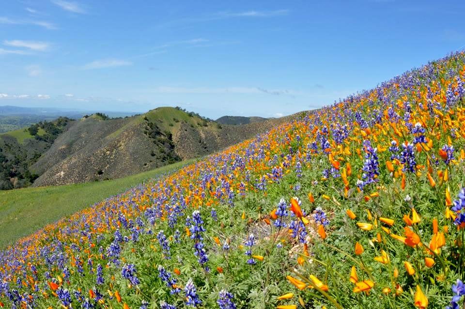 Figueroa-Mt-flowers