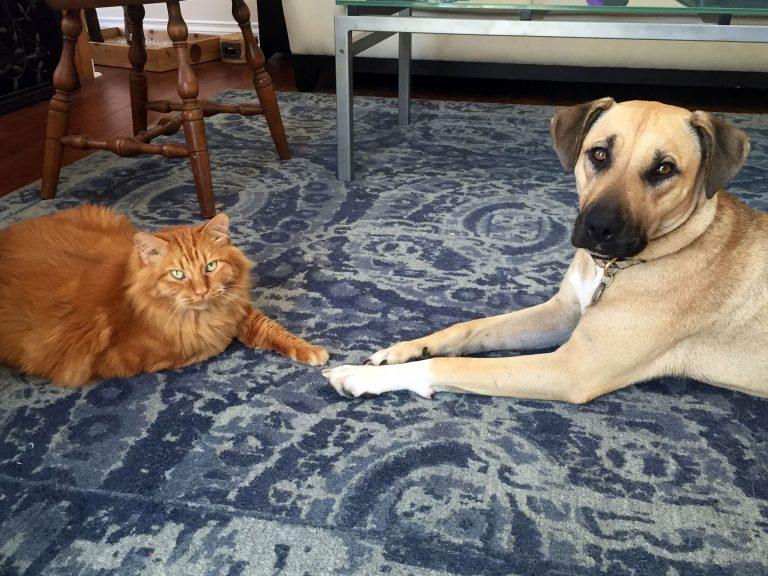 Ollie-and-Kitty-768x576.jpg