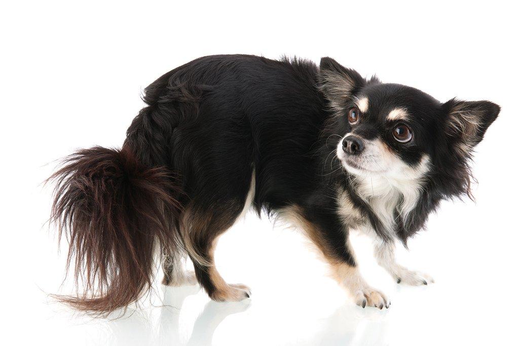 fearful dog.jpg