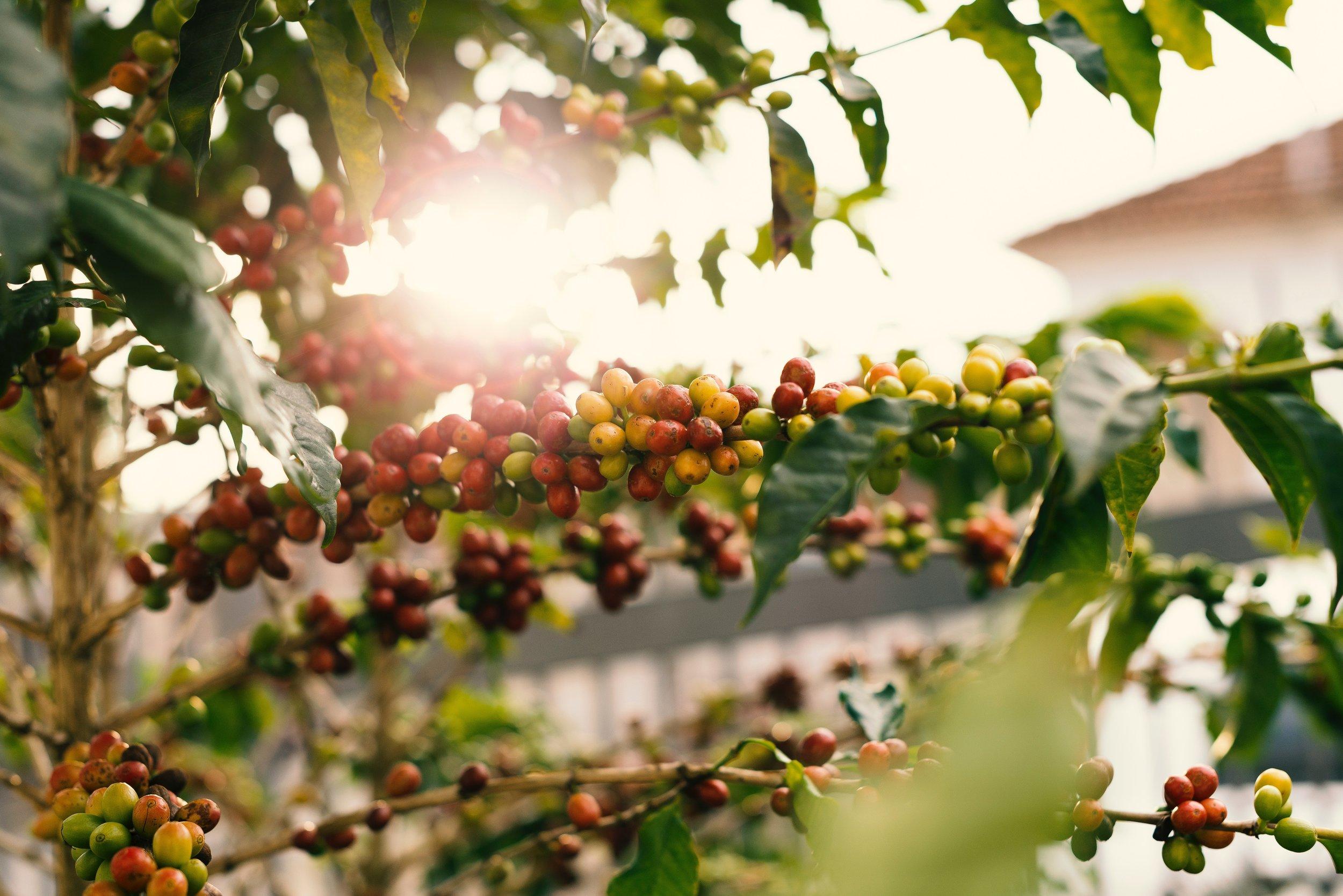 berries-blur-branch-1556665.jpg