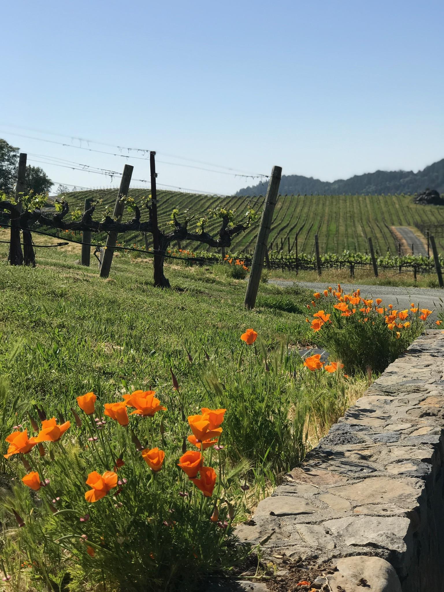 Pride Winery, Napa Valley, CA