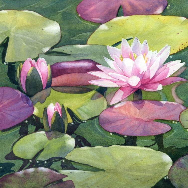 """""""Nymphaea"""" Watercolor by Lorraine Watry"""