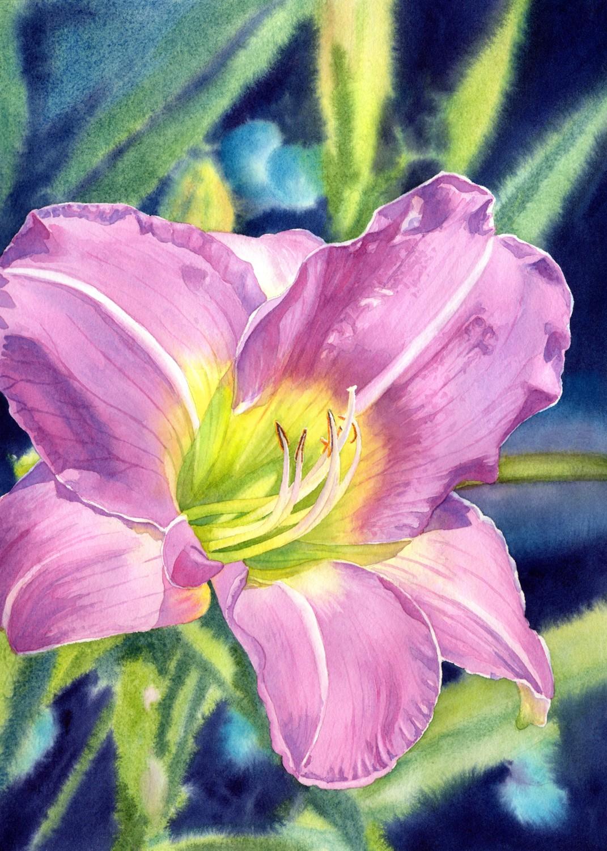 Lavender Vista Daylily © Lorraine Watry