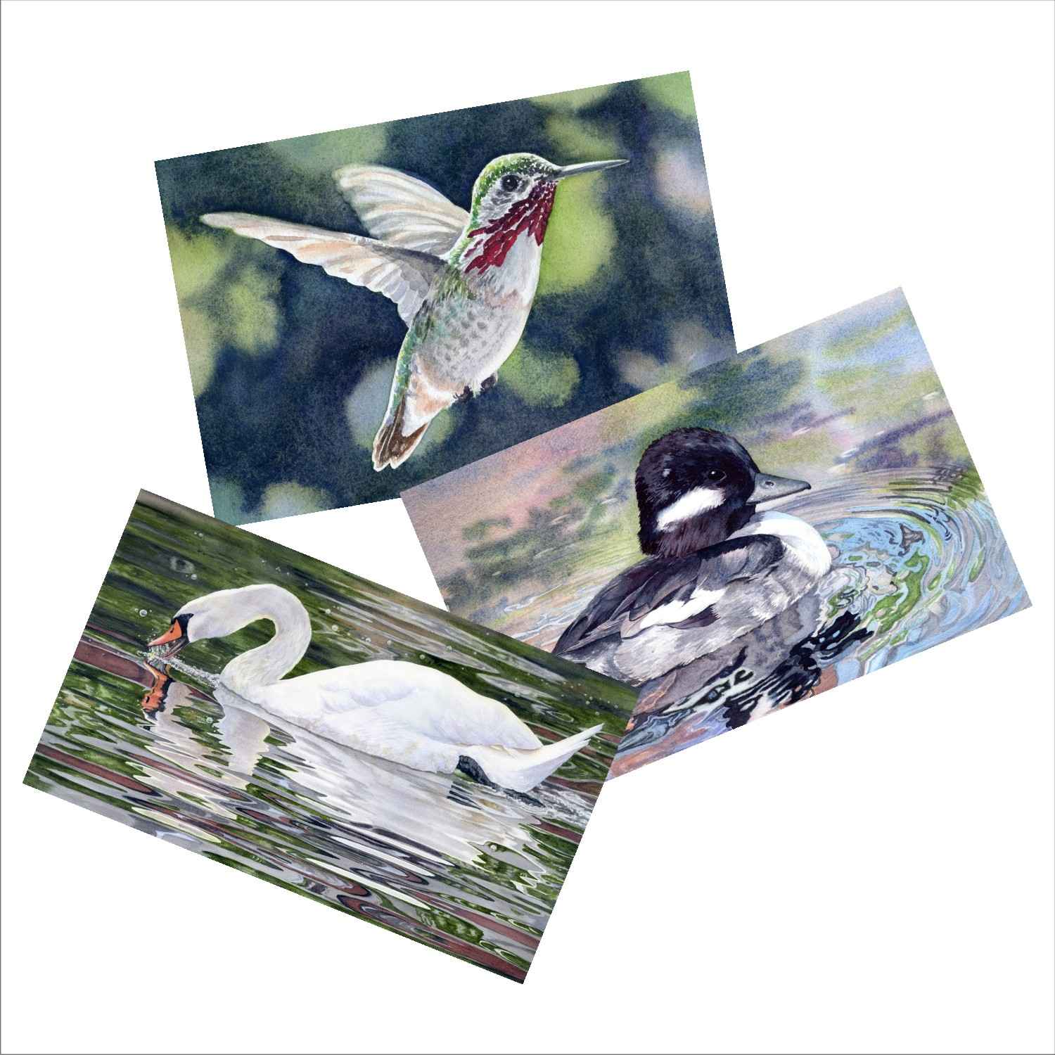 Bird Scene Blank Note Card Sets from watercolors by Lorraine Watry