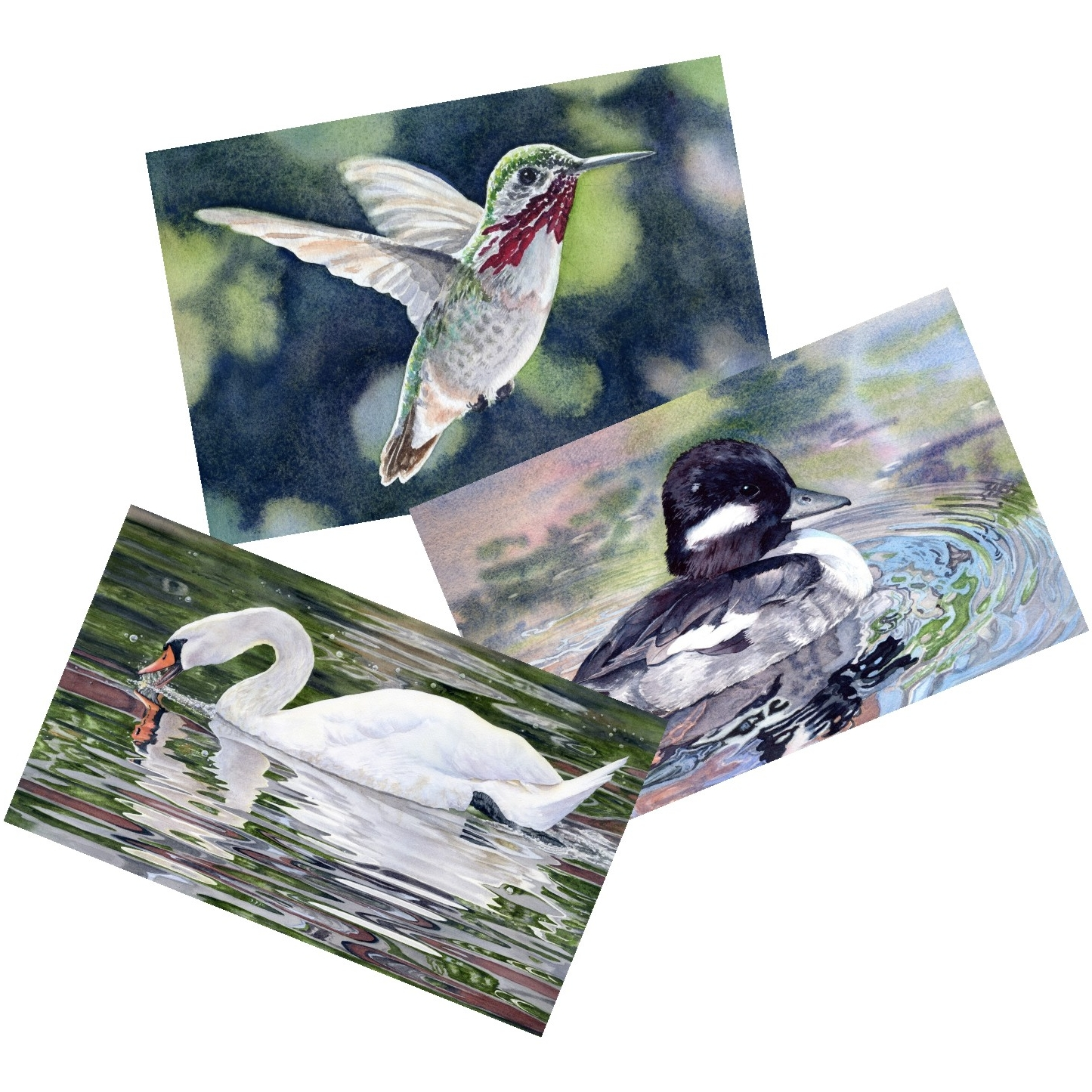 blank-note-cards-bird-scene-prints-lorraine-watry.jpg