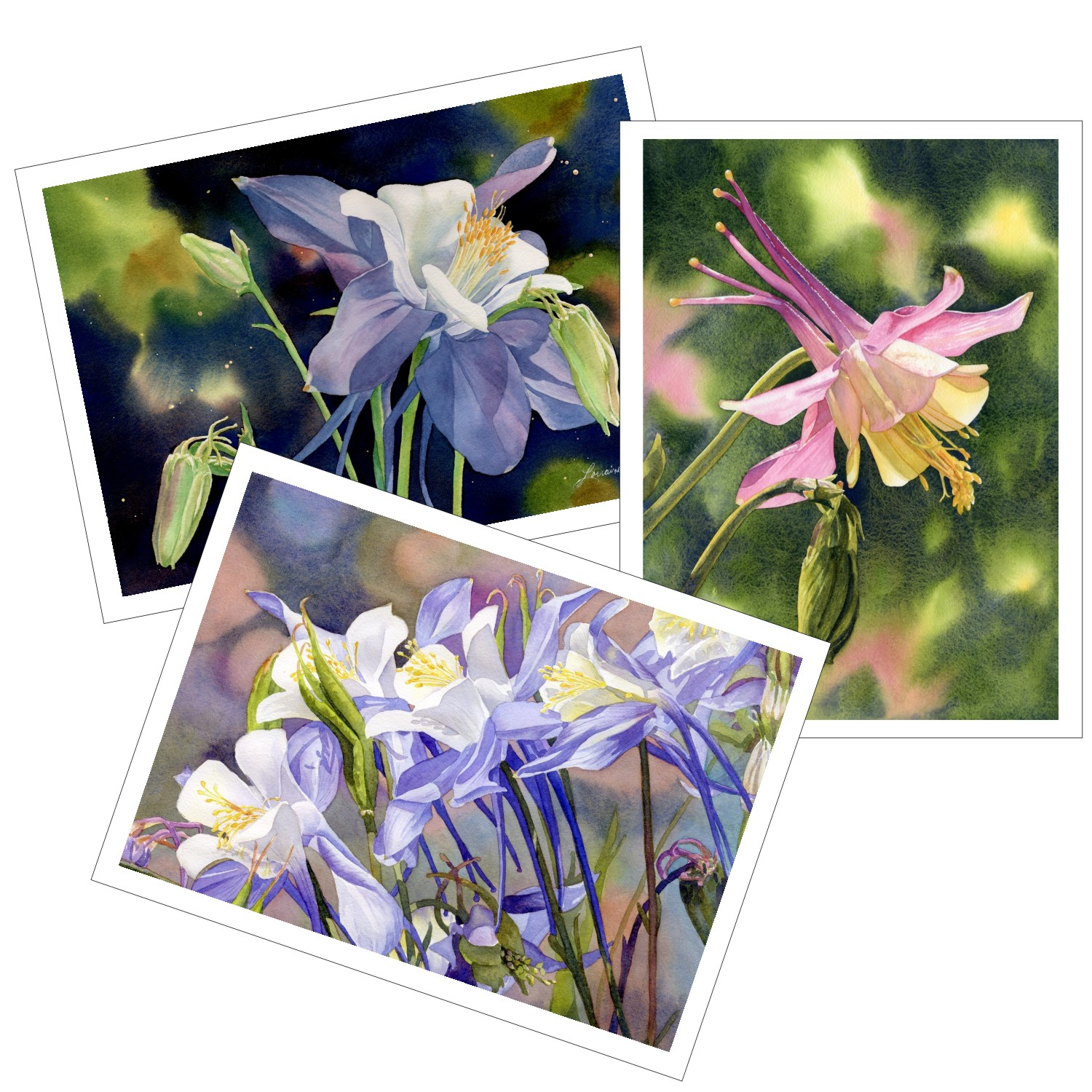 Columbine Blank Note Cards from watercolors by Lorraine Watry