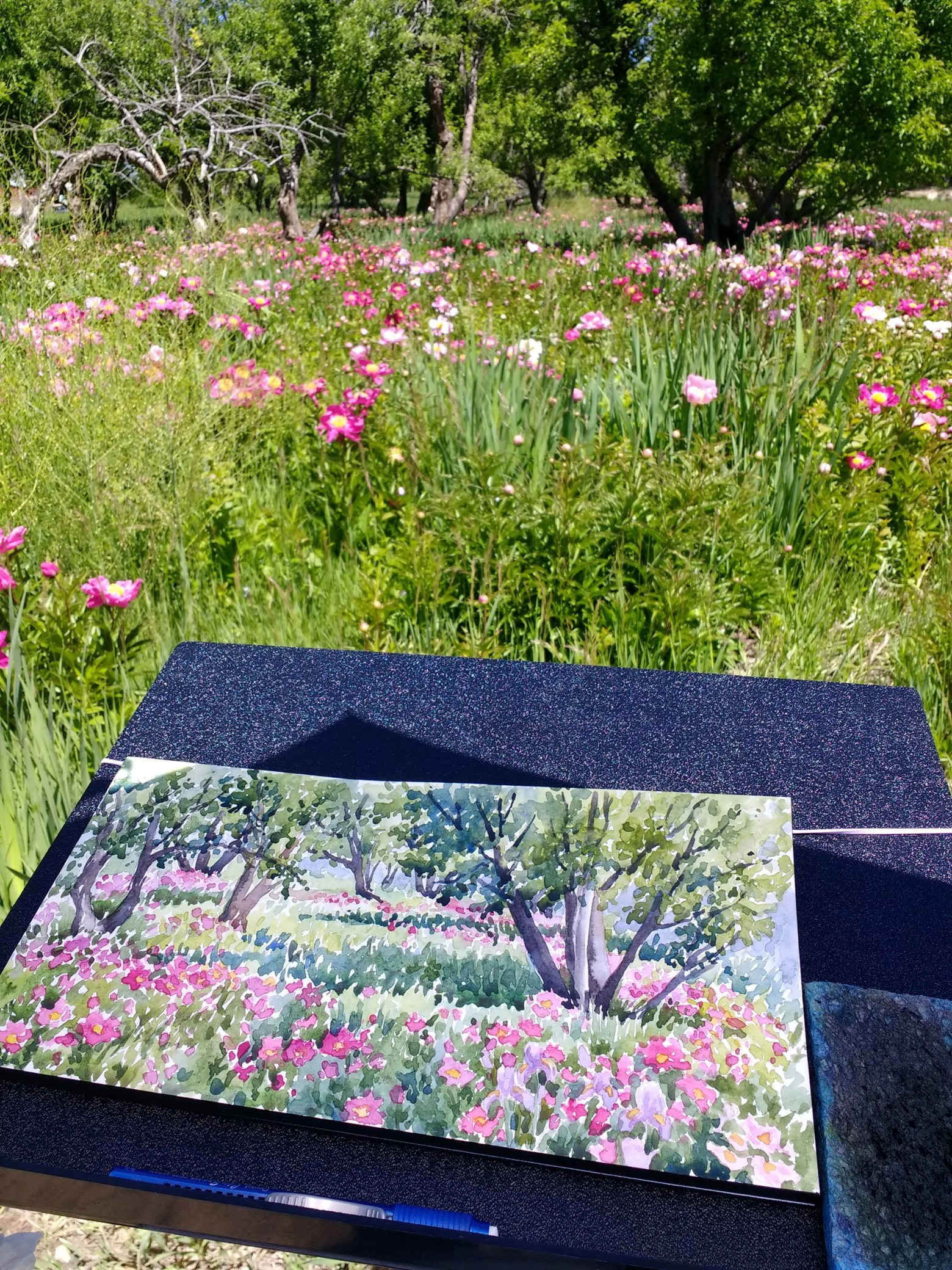 plein-air-painting-Lorraine-Watry-La-Resolana-Peony-Farm-Pueblo-Colorado-2.jpg