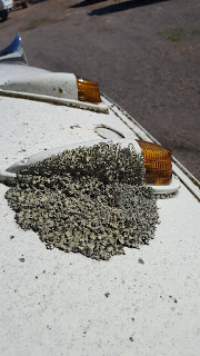 A big patch of lichen growing on the roof.