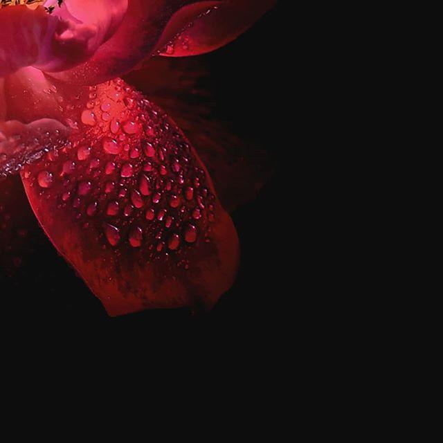 Imagine this. You wake up every morning, just like a blooming flower. That slow motion, that encouraging sound. These colors. Just as our photography, Tones of Blossom. // Představte si to. Každé ráno se probouzíte, stejně jako květina, která rozkvétá. Ten pomalý pohyb, ten povzbuzující zvuk. Ty barvy. Stejně jako naše fotografie, Tones of Blossom. #artylist #photo_art#obrazy #interierovydesign #wallart #homedecor  #homedecorations #artspace #artdecor #artprint #artcollection #artiseverywhere #designinspot #interiorstylist #interiorideas #gallerywall #czechdesign #printdesign #printableart #printart #photo_art #photographydesign