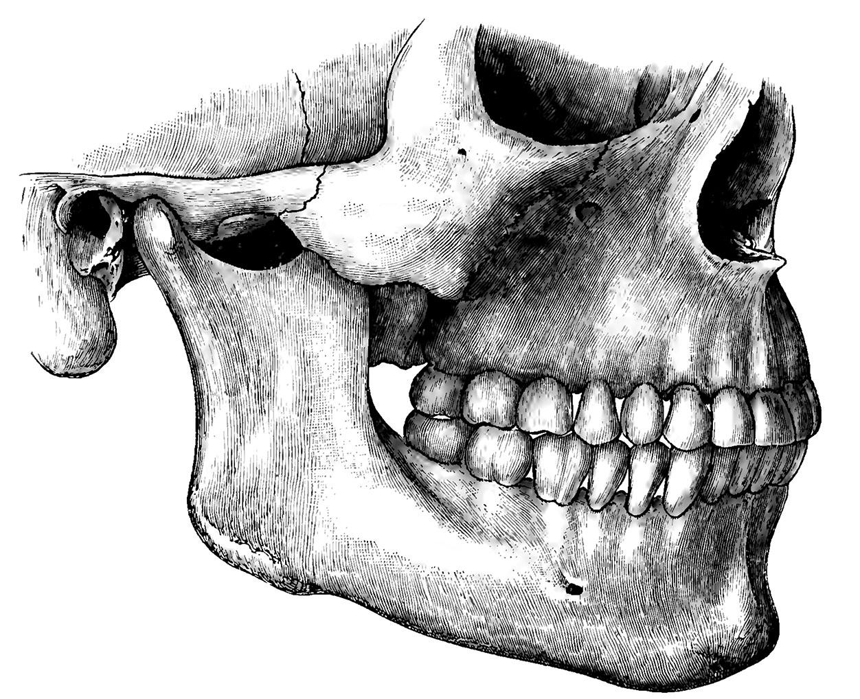 jaw_bone.jpg