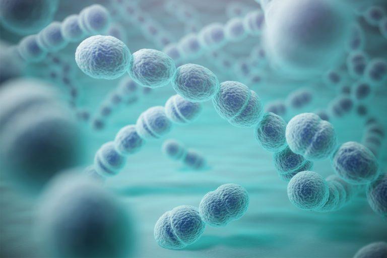 - A las bacterias les encanta el interior de nuestro cuerpo, y nuestra boca, con su calor y humedad constante, sumado a la presencia de partículas de comida, no es ninguna excepción.
