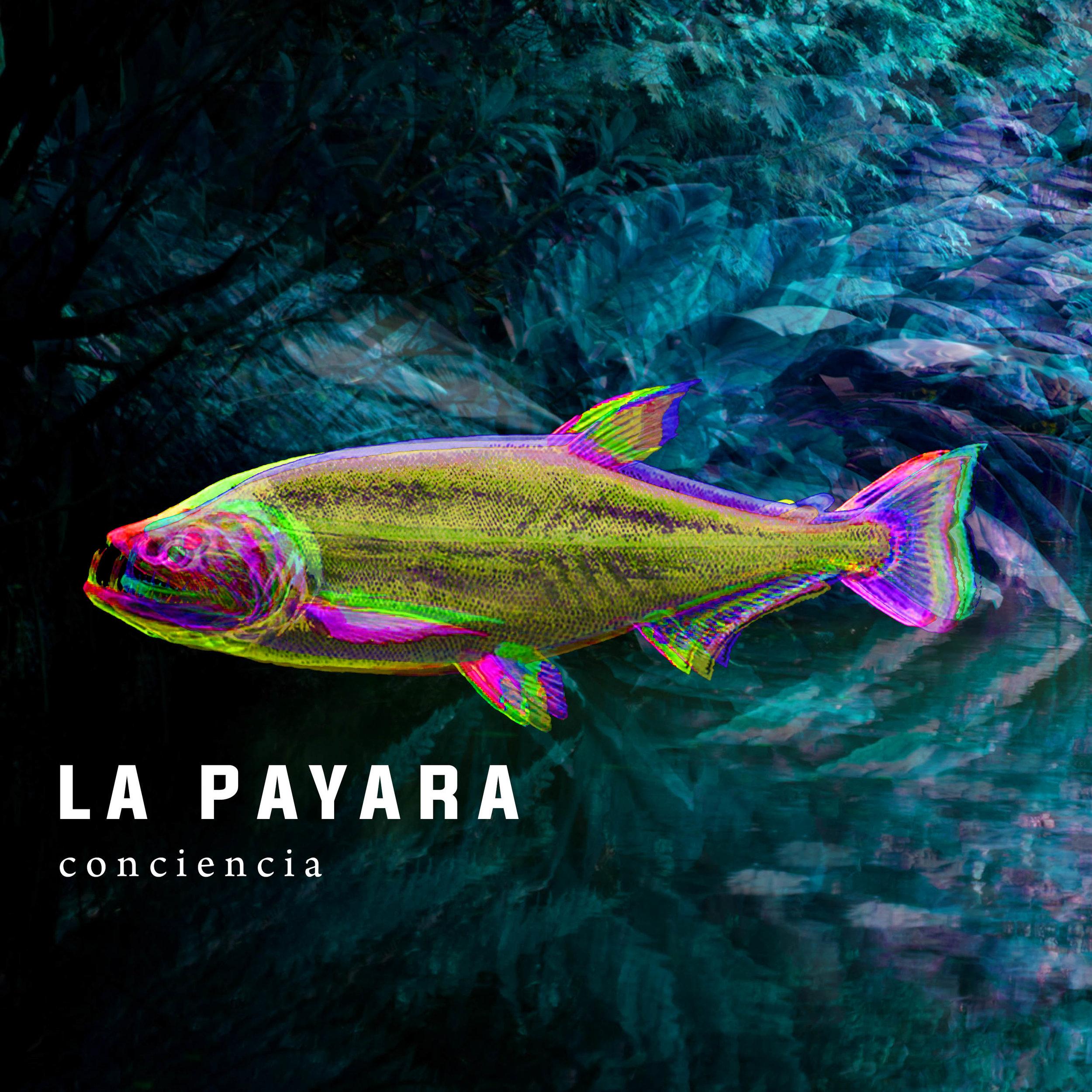 Conciencia EP    La Payara