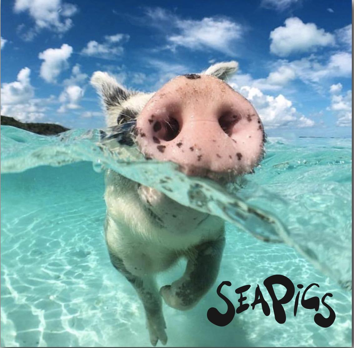 Swimming Pigs of Pig Island.