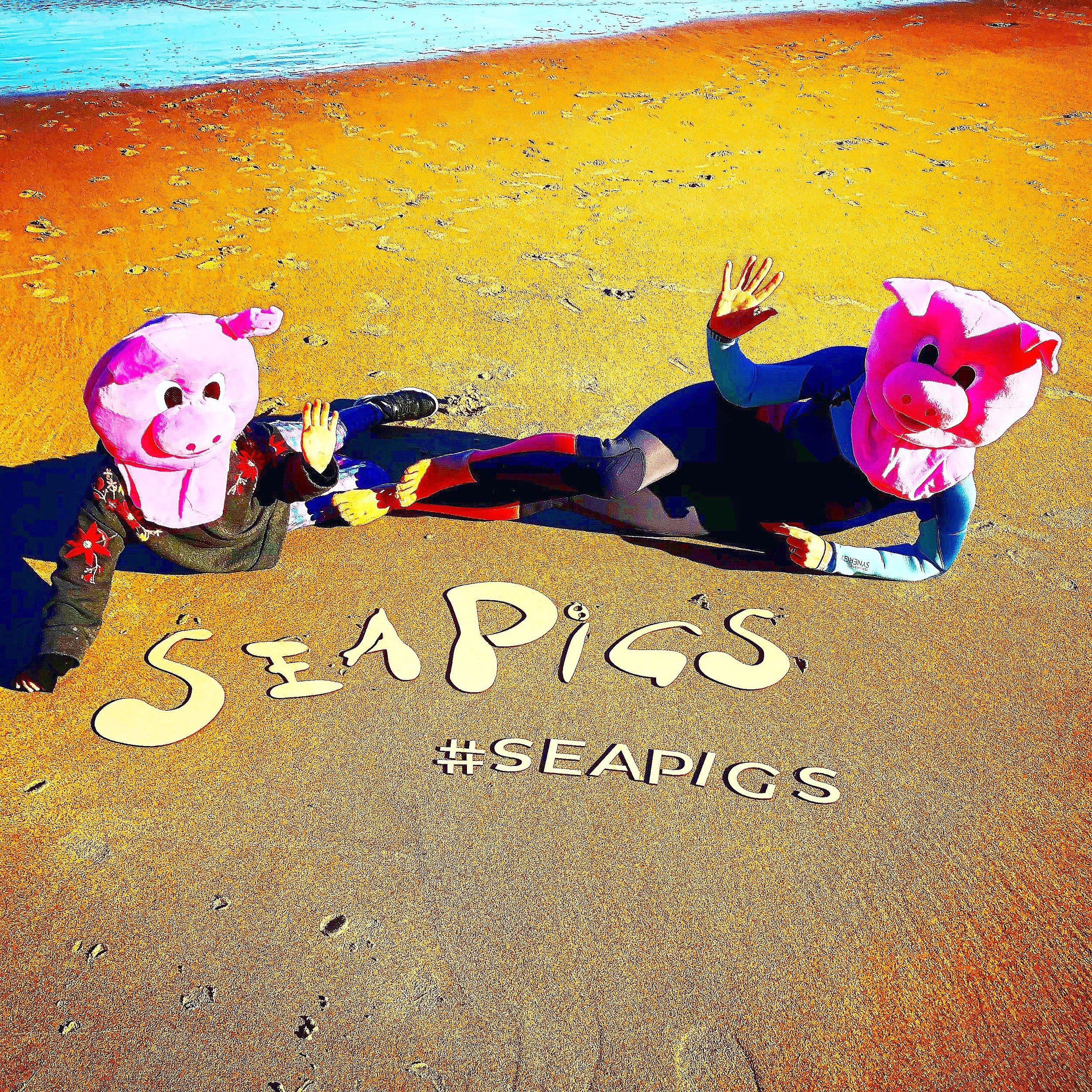 SeaPigs at the Beach