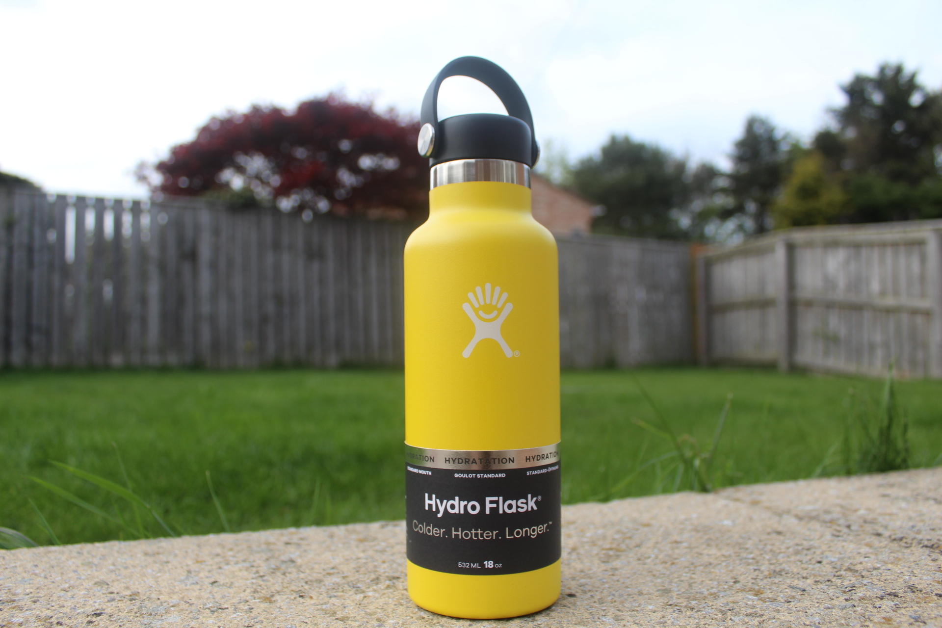 Hydro Flask Water Bottle - Sea pigs review