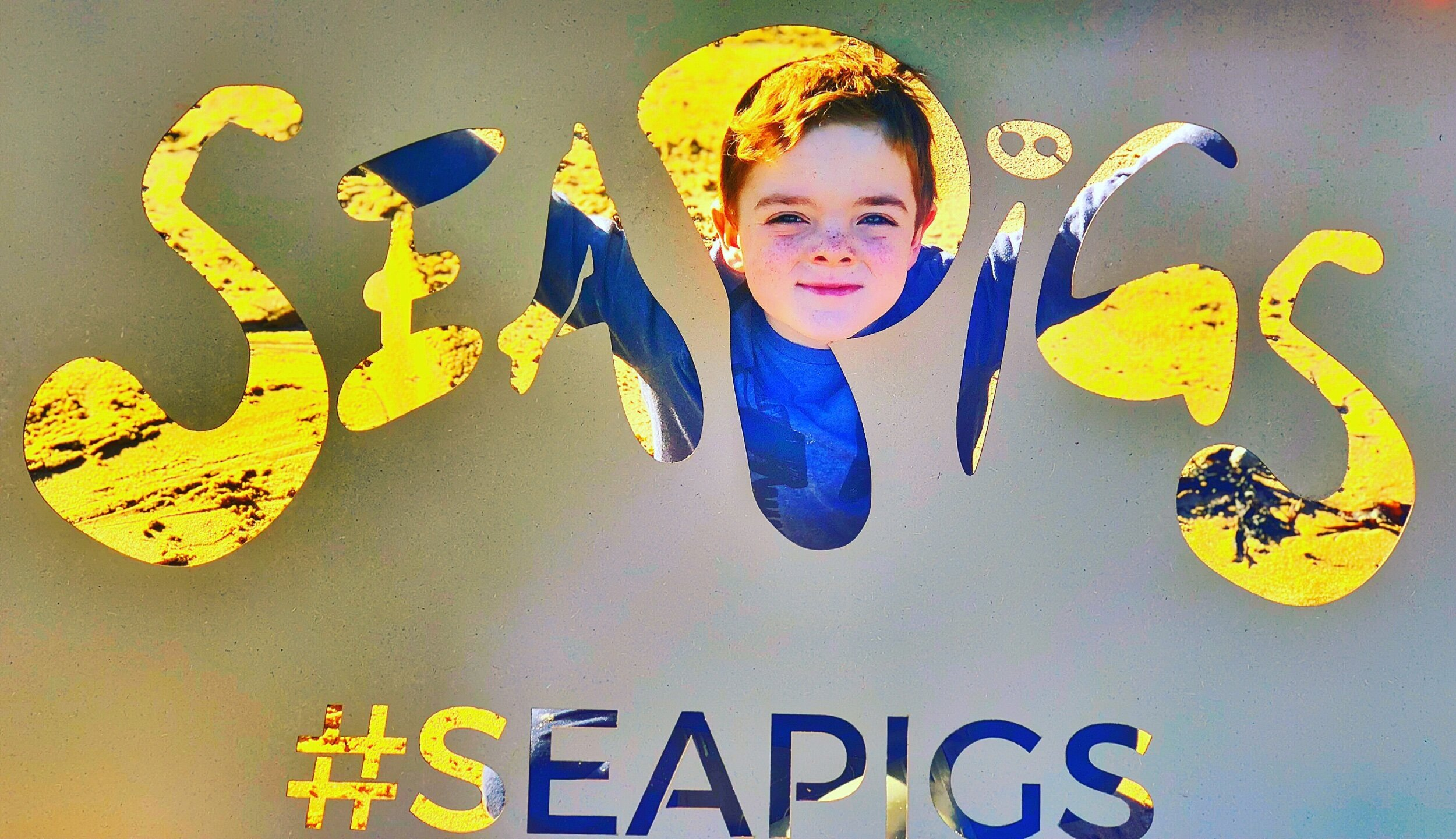 Silly SeaPigs