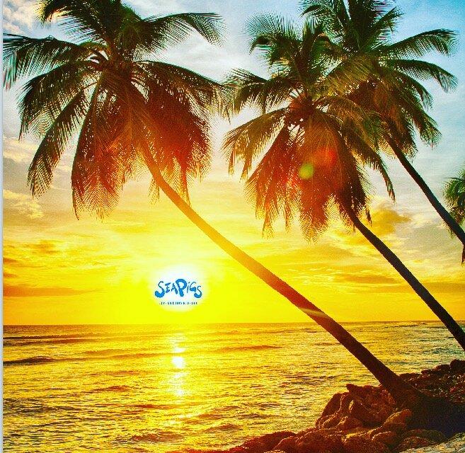 Love Pig Island the Bahamas