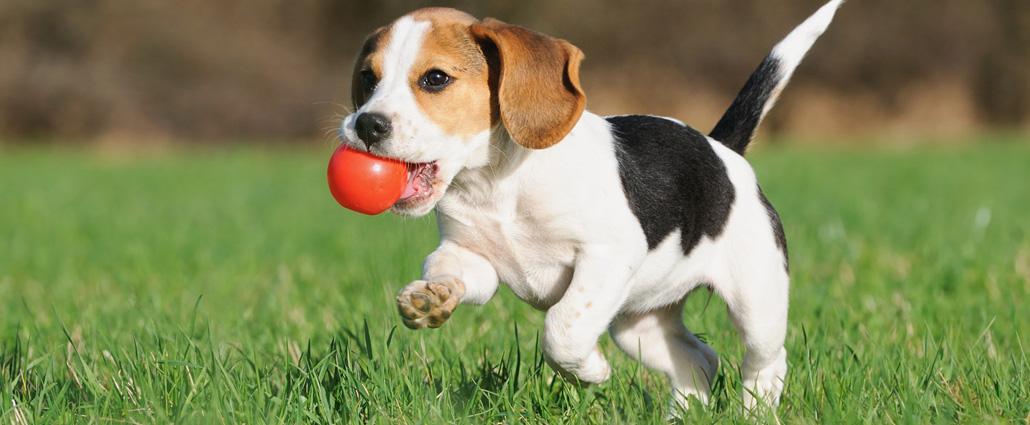 Puppy-Training-01sl.jpg