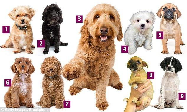 designer-dogs.jpg