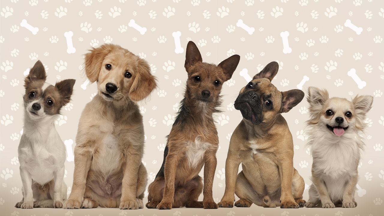 dogs part of the family.jpg