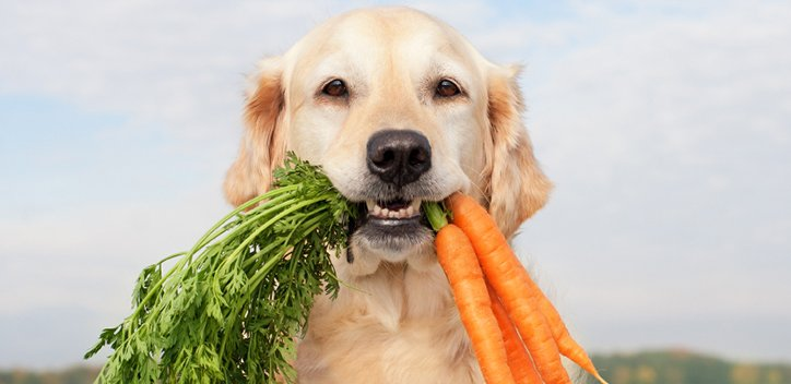 dog eating carrot.jpg